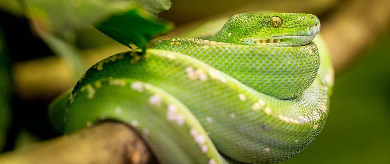 Exotic Snake