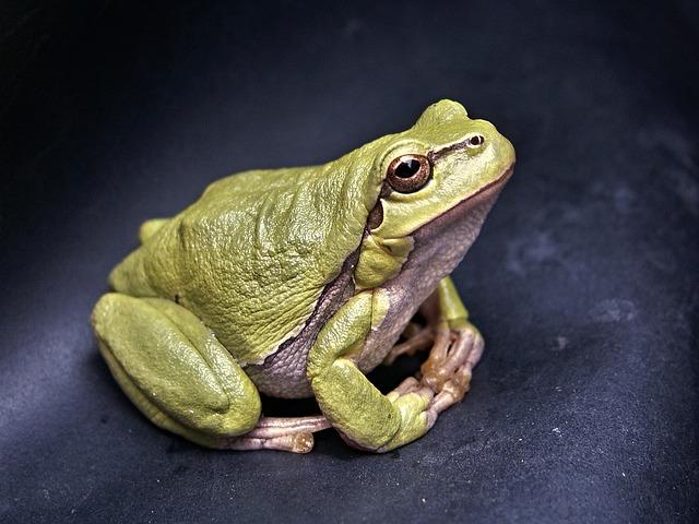 Amphibian Care