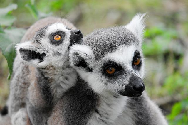 Primate/Prosimian Care