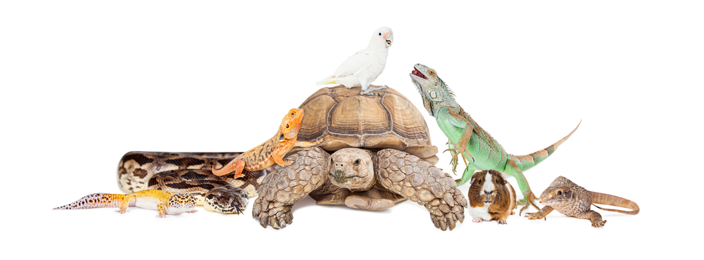 Large Group of Exotic Pets Together